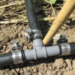 1/2-inch poly tee with 1/2-inch black irrigation hose and hose clamps
